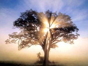 oak-tree-light_6587529_orig