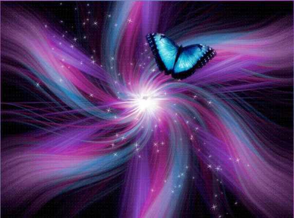 Indigo-Butterfly-butterflies-23164679-800-594