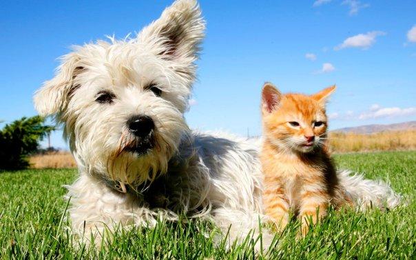 dog-cat-smarter-ftr