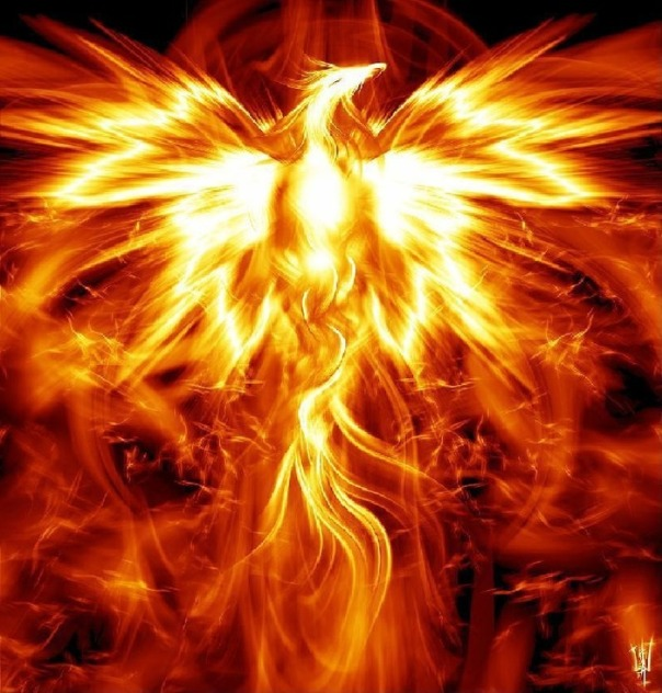 Phoenix-rising-from-the-ashes